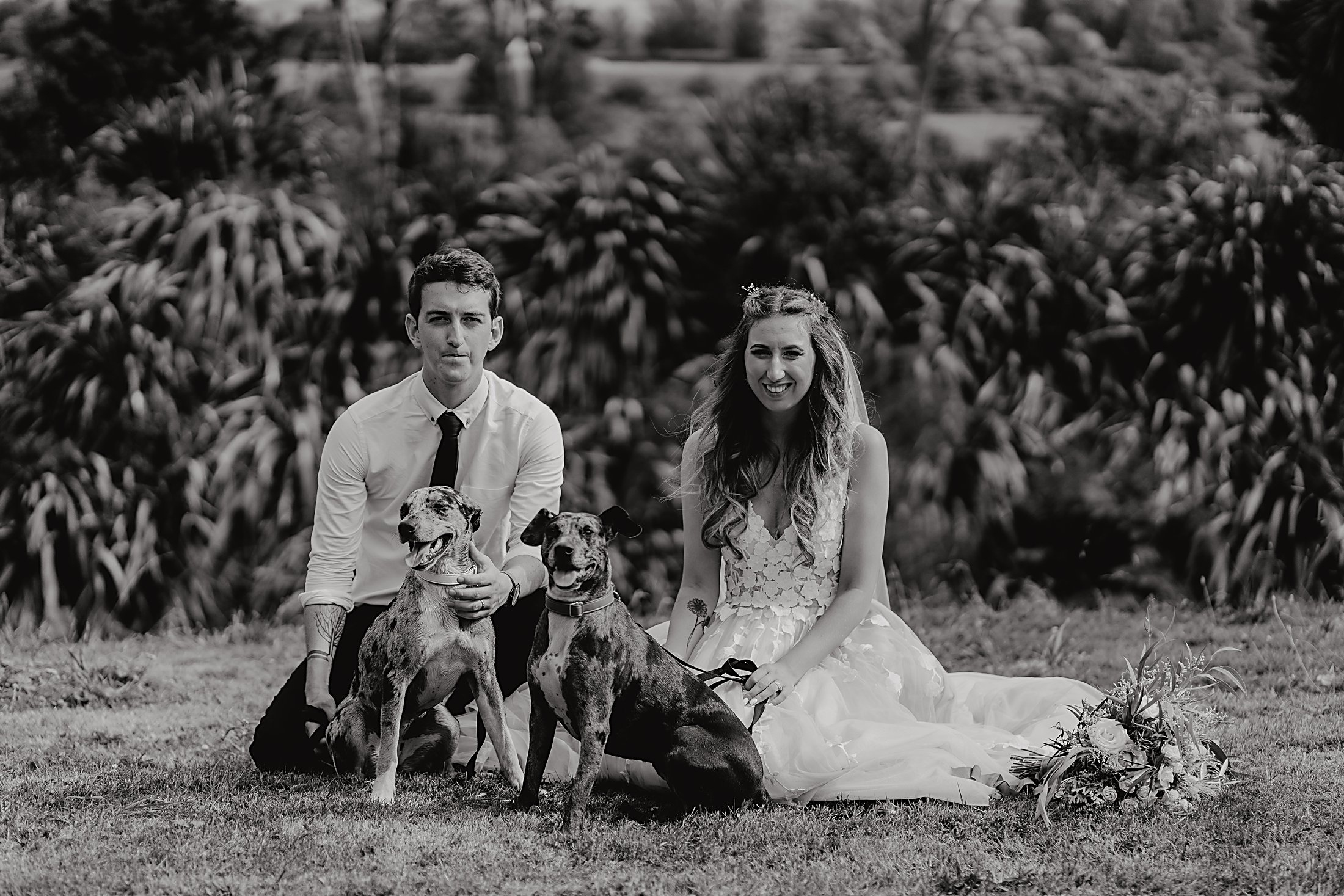 Bride and Groom and wedding dogs